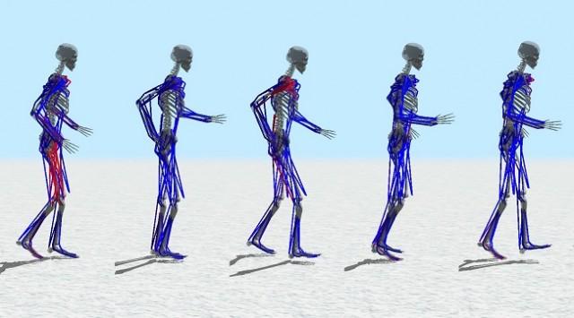 골격근 100여개의 데이터를 이용해 걷는 과정을 시뮬레이션하는 데 성공했다. - 서울대 컴퓨터공학부 제공